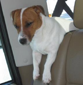Dog hot in car.